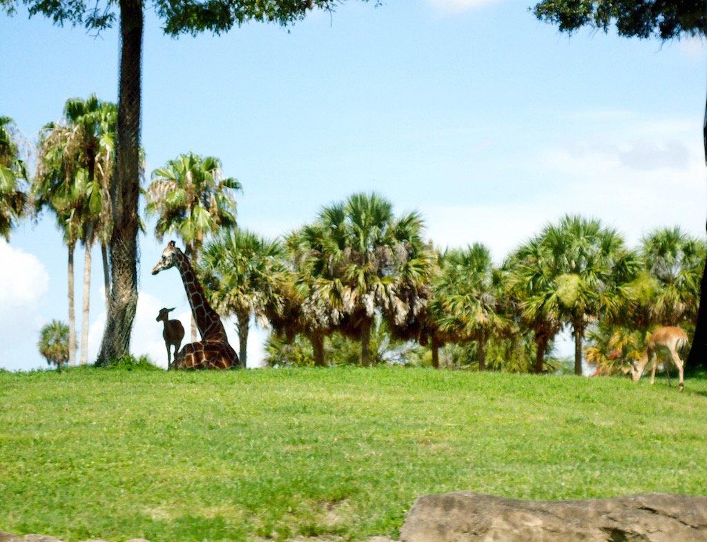 Busch Gardens Tampa Vacation
